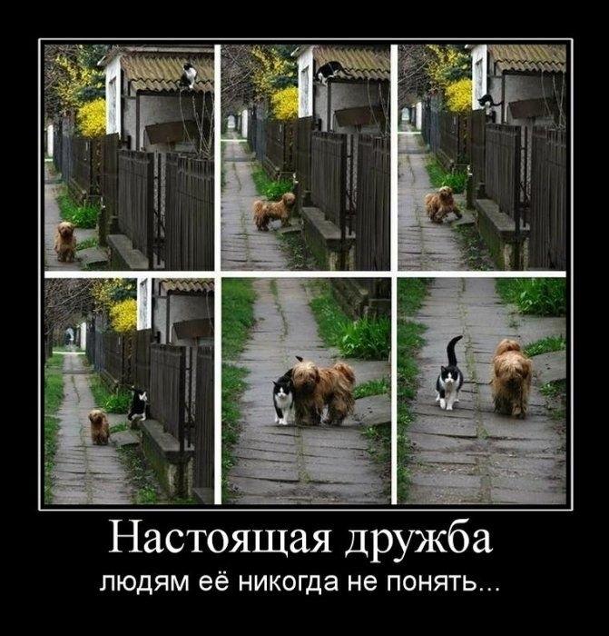 http://fishki.net/picsw/102009/09/post/demotivator/demotivator059.jpg