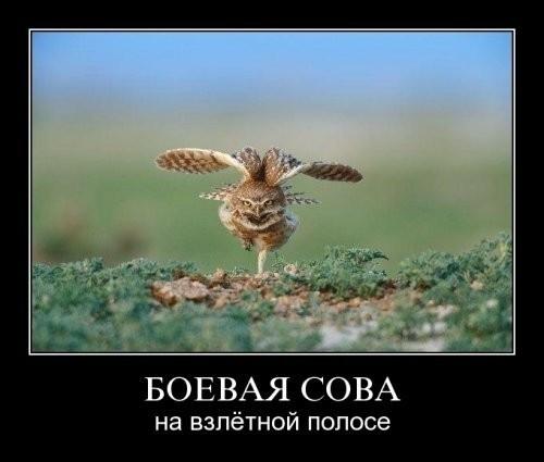 http://fishki.net/picsw/102009/12/post/demotivator/demotivator110.jpg