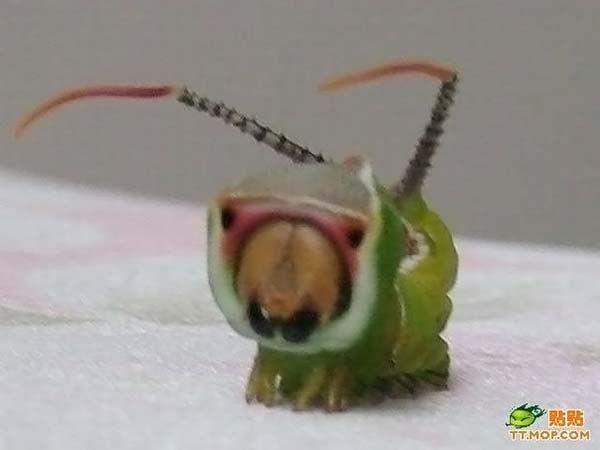 Непонятное насекомое (5 фото)