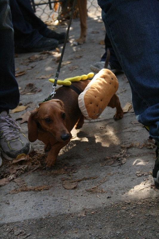 Собачий парад на Хеллоуин 2009 (43 фото)