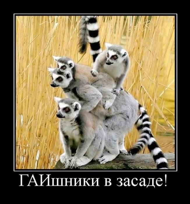 http://de.fishki.net/picsw/102009/30/post/demotivator/demotivator088.jpg