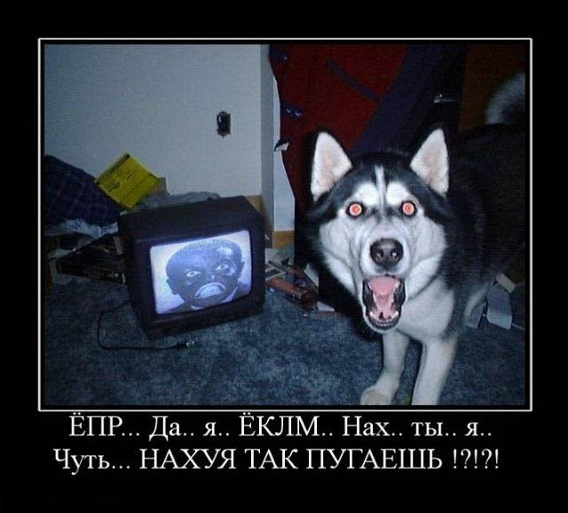 http://de.fishki.net/picsw/102009/30/post/demotivator/demotivator184.jpg