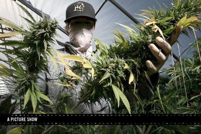 Выращевоние марихуаны как начать выращивать марихуану