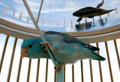 """""""Рыбка в банке"""" плюс попугаю не скучно:"""