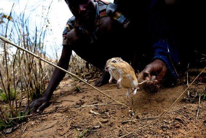 Крысоловы из Мозамбика (22 фото)