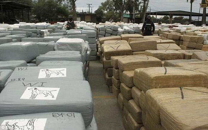 В Мексике изъята партия марихуаны весом в 105 тонн (10 фото)