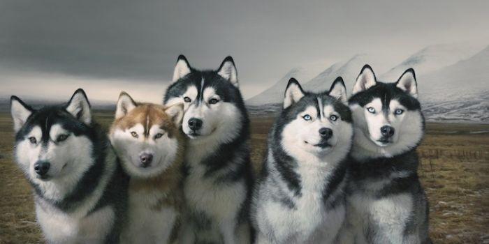 Портреты собак (15 фото) (15 фото)