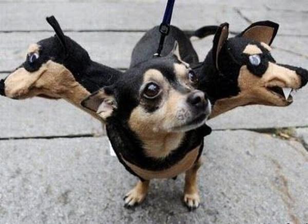 Необычная одежда собак (53 фото)