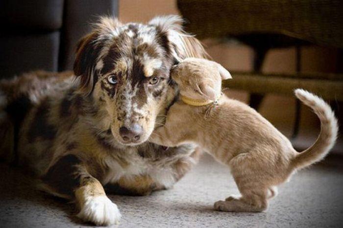 Настоящая дружба животных (16 фото)