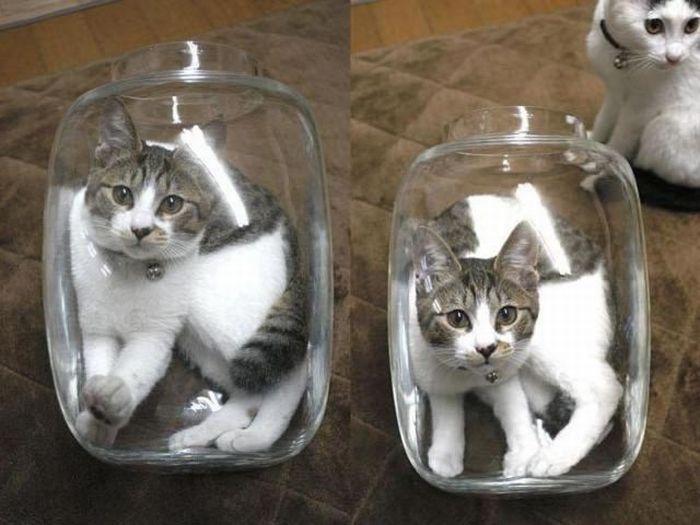 Кошачье ассорти (8 фото)