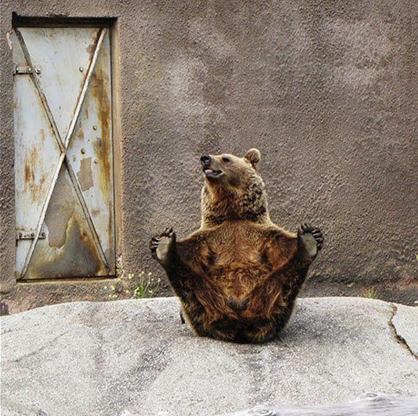 Медведь-йог (7 фото)