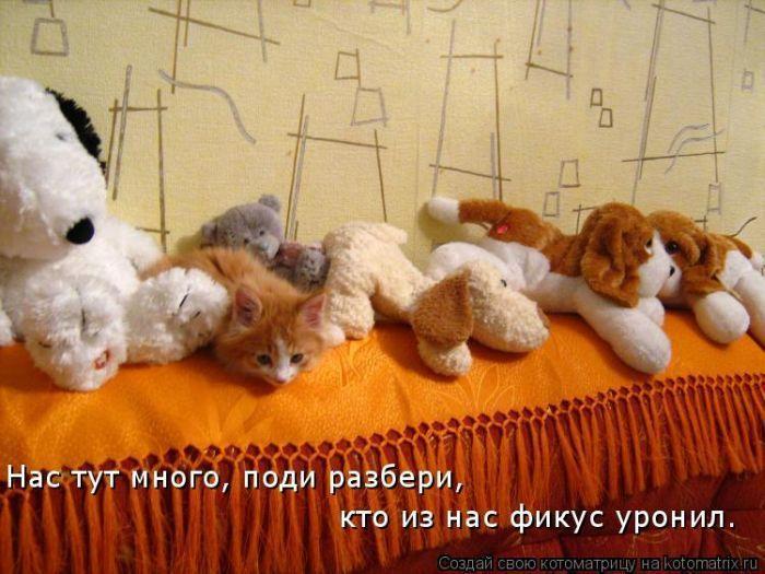 Самые лучшие котоматрицы недели (50 фото)