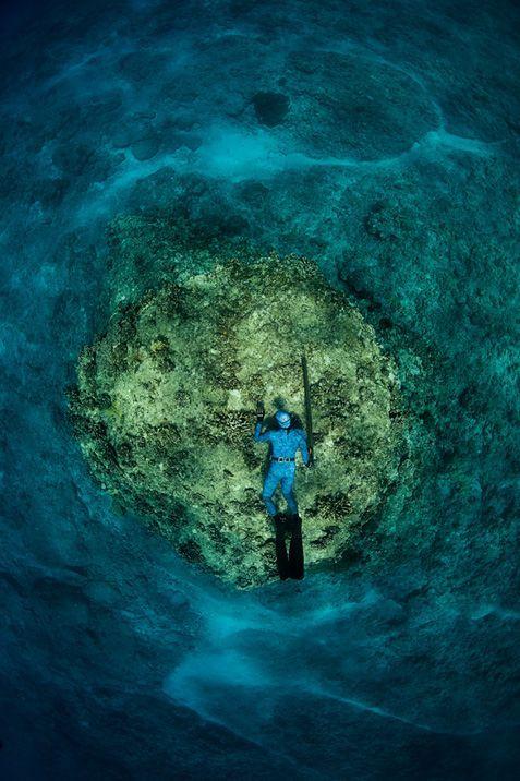 Подводный мир с кровавой охотой вот