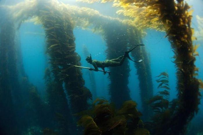 Подводная охота (11 фото)