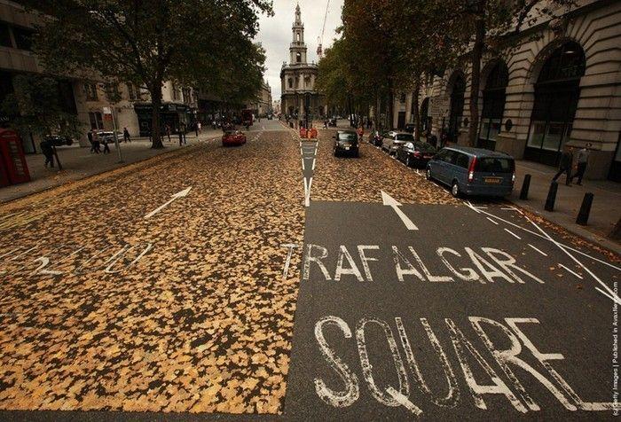 Лондонская кленовая дорога (5 фото)