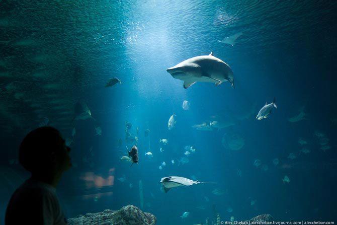 Самый большой аквариум в Европе (35 фото + 1 видео)