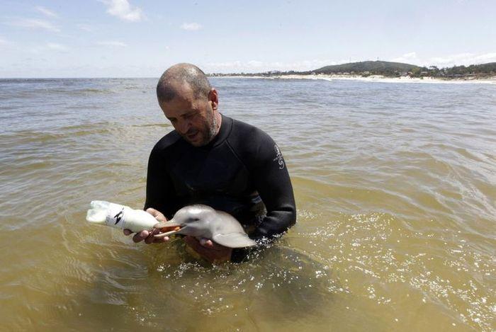 Спасенный детеныш дельфина (8 фото)