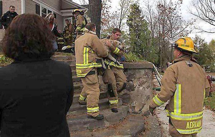 Пожарный спас собаку сделав ей искусственное дыхание (5 фото)