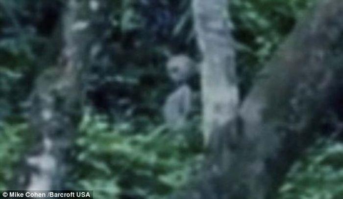 Пришельцы высадились в Бразилии? (3 фото + 1 видео)