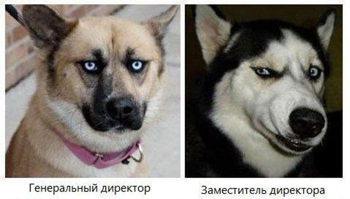 Типичный офис в собачьих мордах (3 фото)
