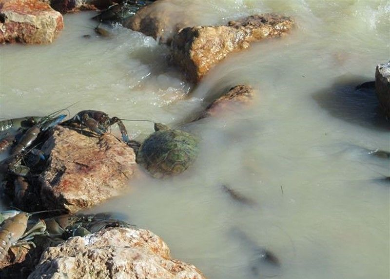 Река Купер-Крик - лучшее место для ловли раков ... (20 фото)