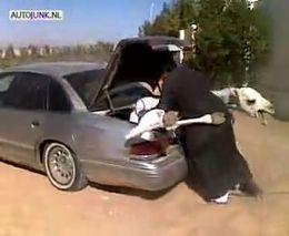 Перевозка верблюда по-арабски