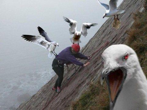 Животные захватили людей (19 фото)