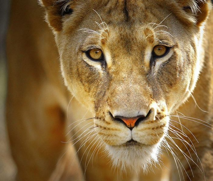 Потрясающие фотографии животных (50 фото)