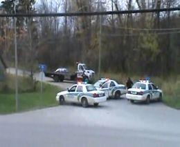 Полицейские ловят разъеренную корову