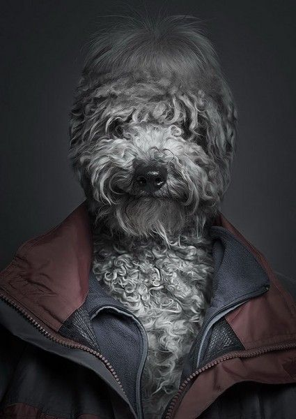 Собаки-люди (4 фото)