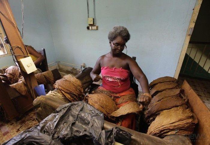Как делают кубинские сигары (11 фото)