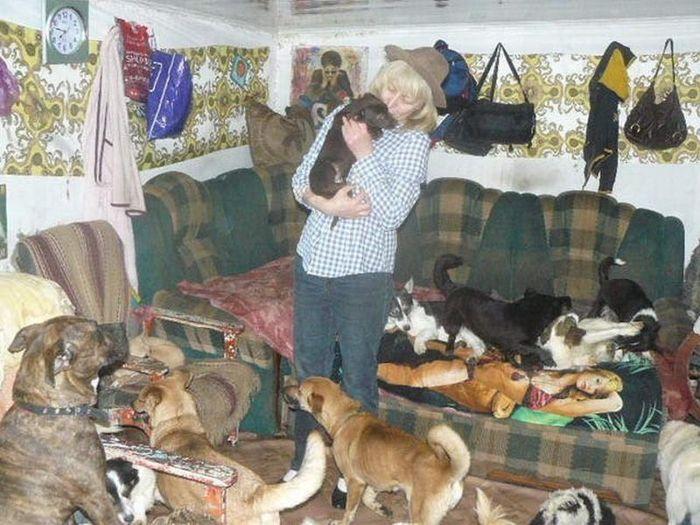собаки и кошки в пермских приютах сегодня обогреватели для