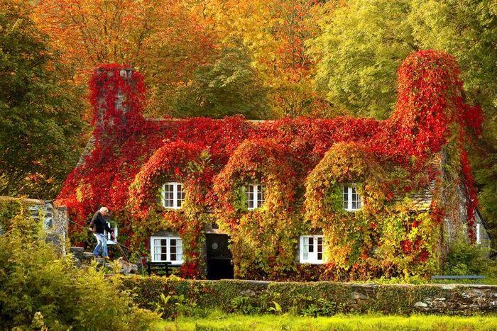 Осенние дома заросшие плющем (14 фото)
