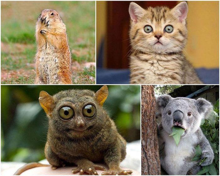 Животные, которые волнуются за нас (35 фото)