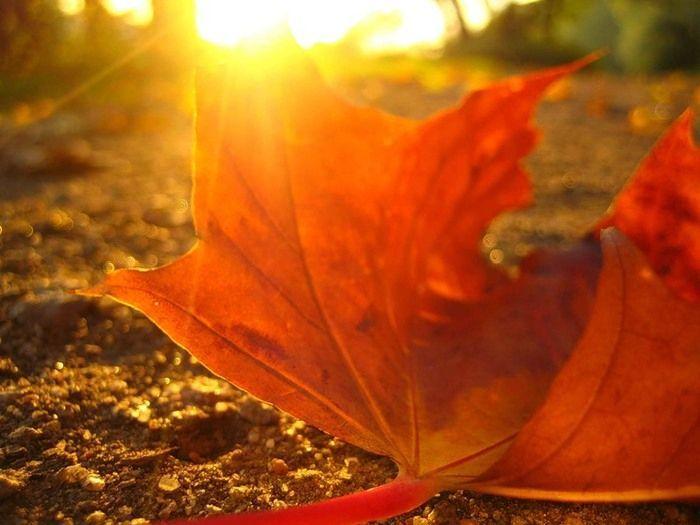 Осень во всей красе (39 фото)