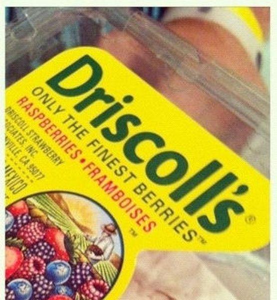 Сюрприз в упаковке лесных ягод (2 фото)
