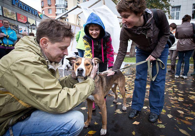 Выставка бездомных собак (17 фото)