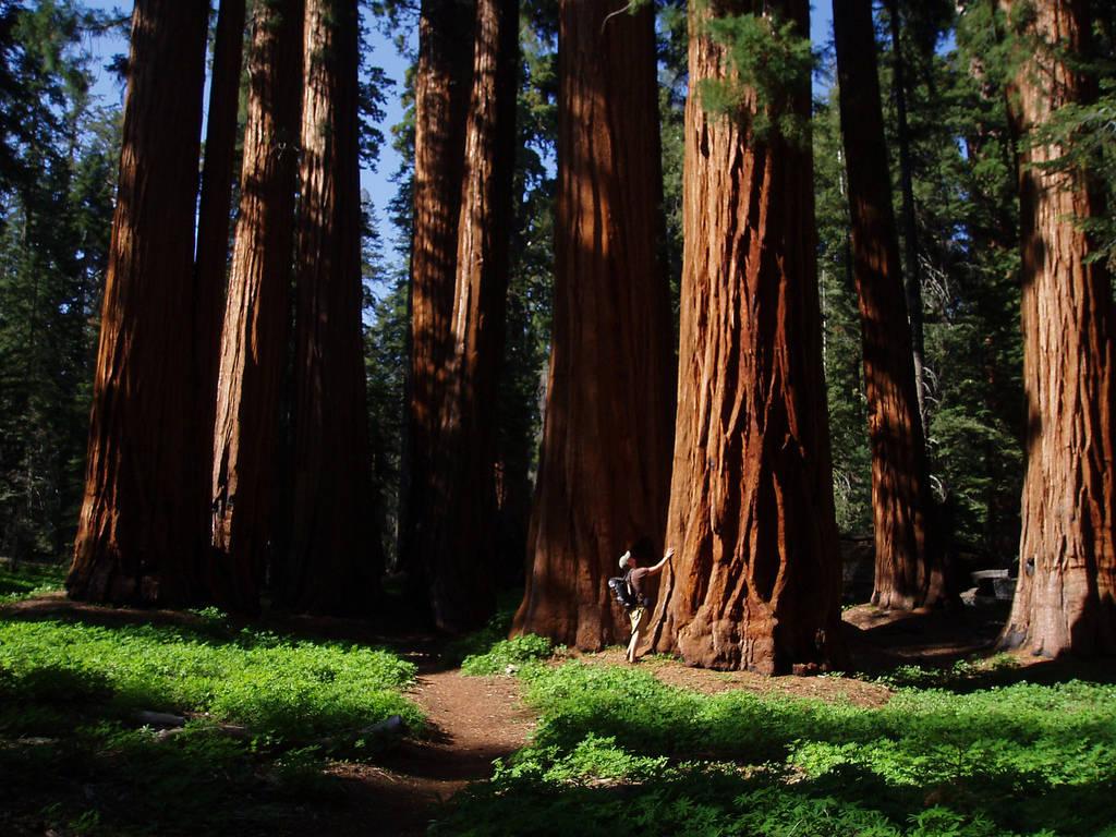 будут большие деревья фотографии глаза