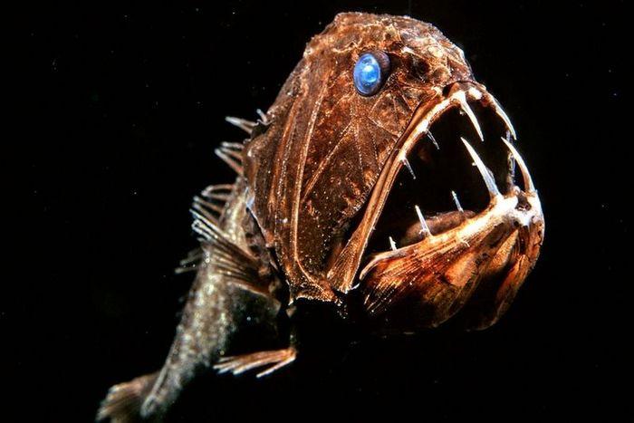 Жители океанских глубин (22 фото)