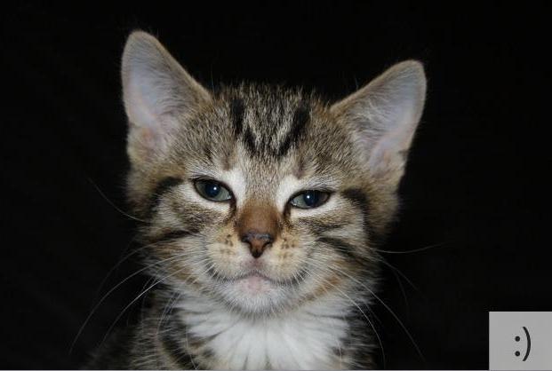 Котосмайлики (15 фото)