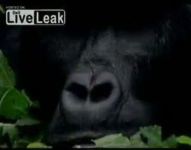 Подборка роликов от 15.10.2012