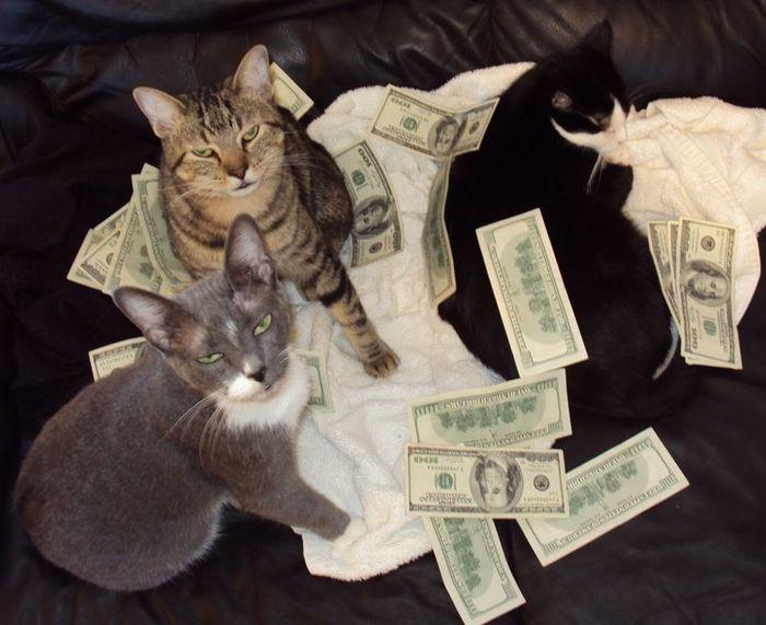Коты и деньги (50 фото)