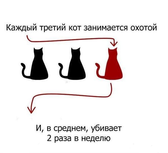 А что вы знаете про своего кота? (9 фото)