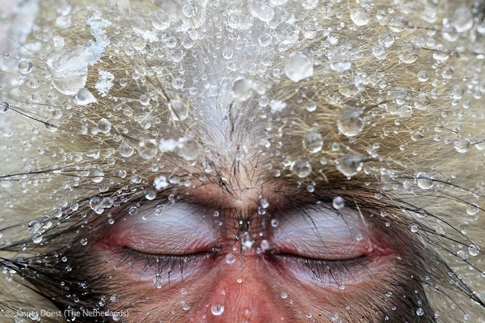 Победители Wildlife Photographer of the Year 2012 (39 фото)