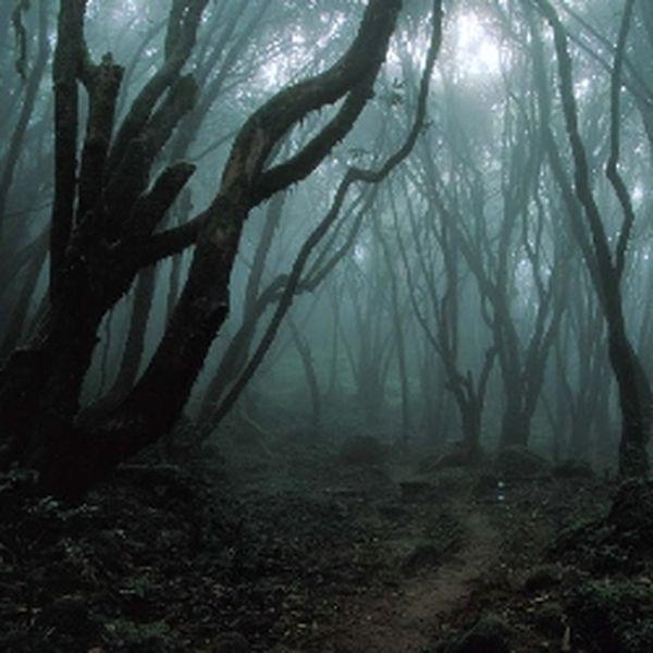 Леса с привидениями (10 фото)