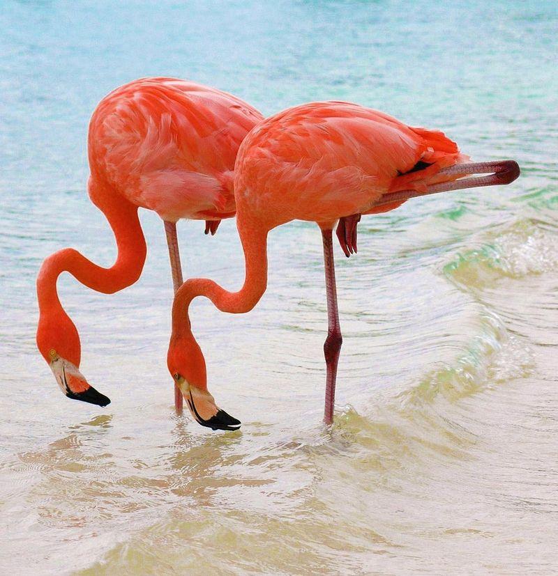 Озеро миллиона розовых фламинго (28 фото)