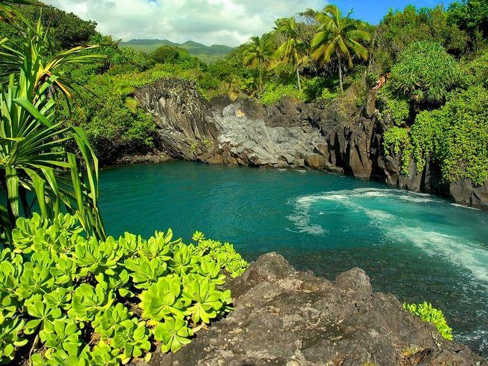 Сады на острове Мауи (32 фото)