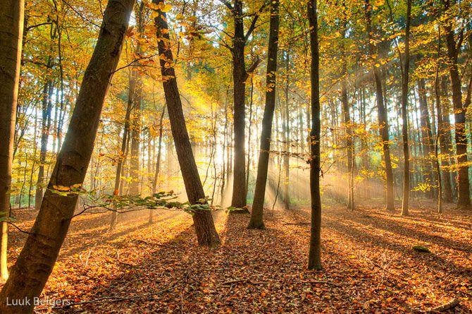 Солнечный лес Люка Белгерса (19 фото)