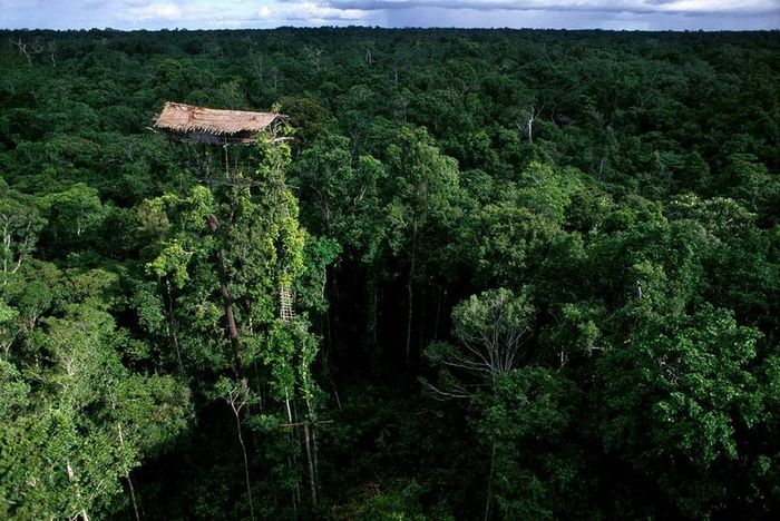 Изолированное от внешнего мира племя Короваи (10 фото)