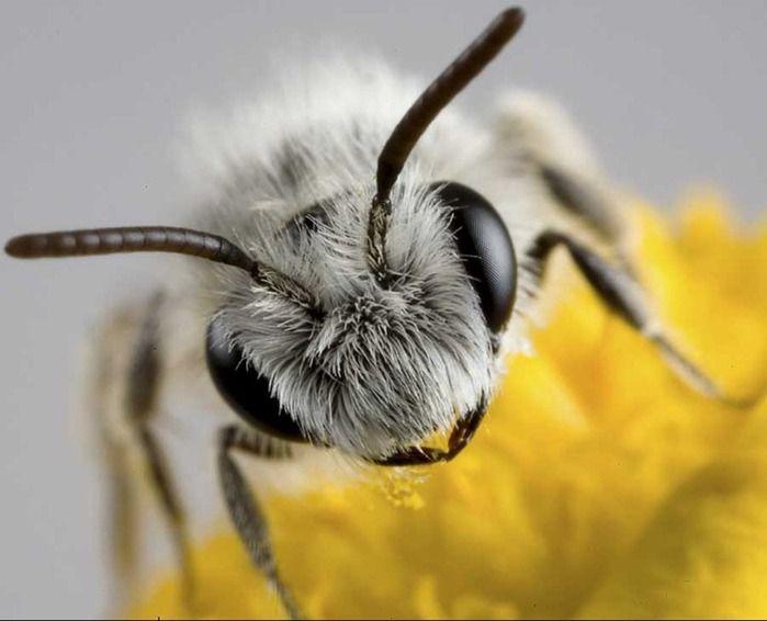 Симпатяшки (макросъемка насекомых) (26 фото)